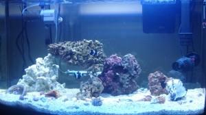Aquarium on Sept 9, 2009