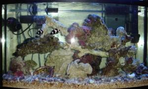Aquarium 11/01/2009