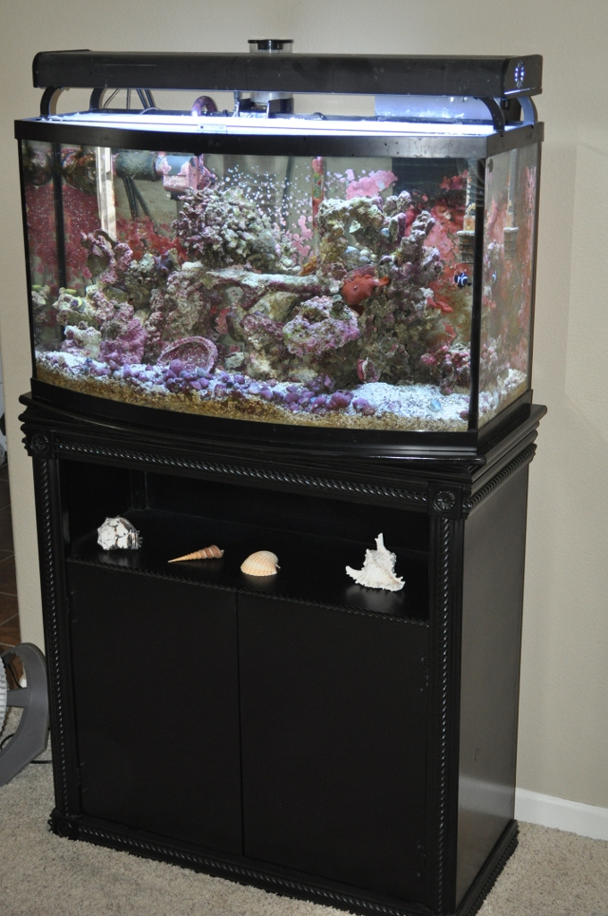 Aquarium on New Stand - The Salty Geek